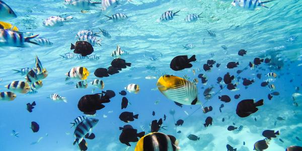 Bora Bora, by Art In Voyage
