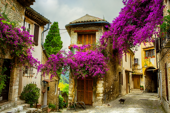 Travel Provence, France- Join our 'Taste of Provence' Curated Journey, departing June 2021