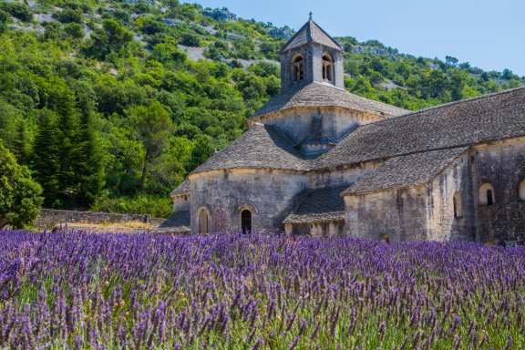 Provence Lavender Fields - Join our 'Taste of Provence' Curated Journey, departing June 2021