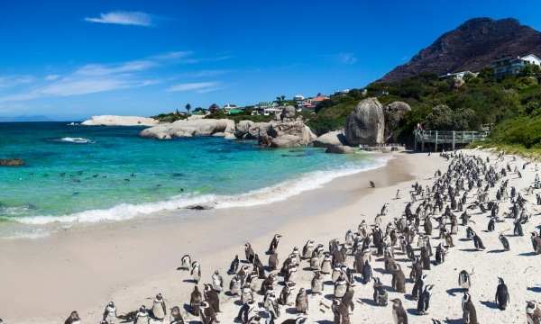 Best Warm Places To Visit In December - Simons Town Penguins, South Africa | By Art In Voyage