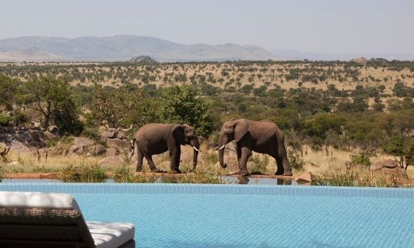 Best Warm Places To Visit In December - Kruger National Park Safari, South Africa | By Art In Voyage