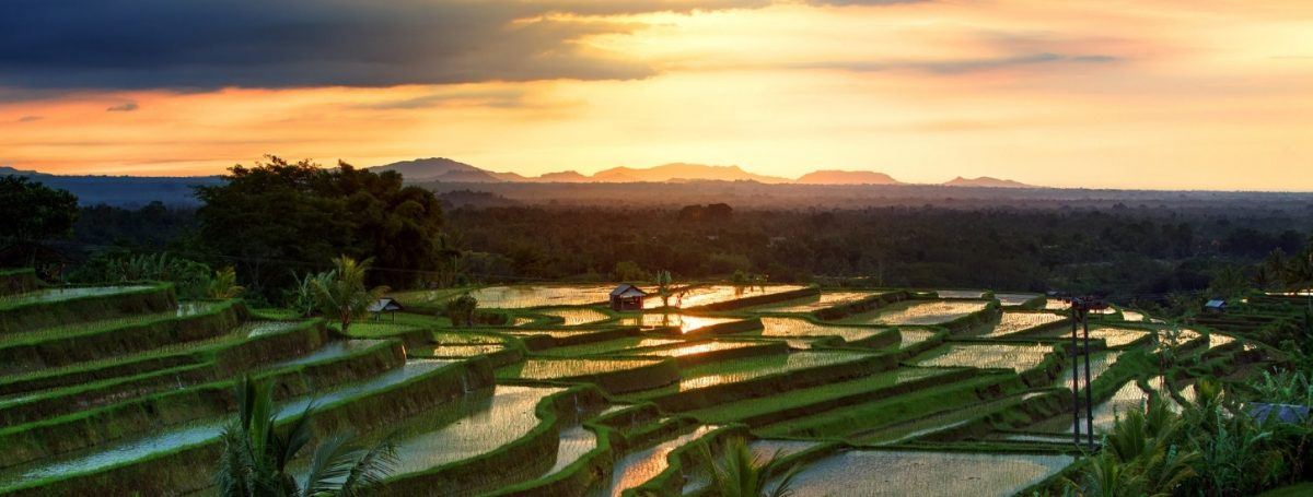 Art In Voyage Bali