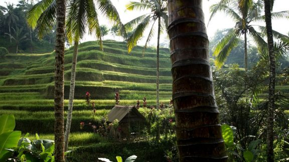 Rice Terraces of Ubud