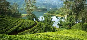 Snapshot of Sri Lanka Curated Travel | By Art In Voyage
