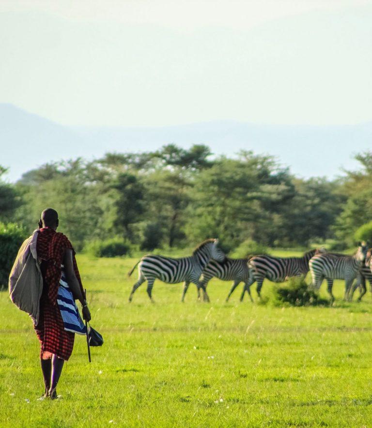 Safari in Tanzania, by Art In Voyage