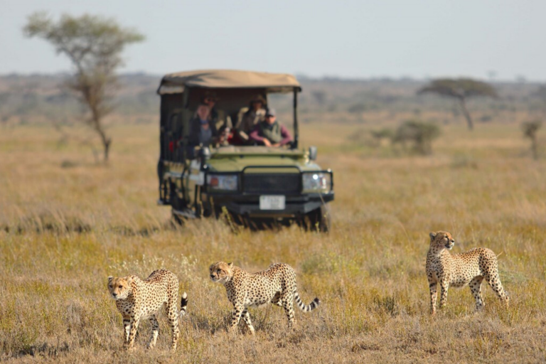 Namiri Plains, selected property in Central Serengeti on the 'Capturing the Great Migration' journey, with Art In Voyage