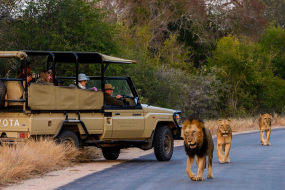 Kruger National Park: Day 7 of the 'South Africa at a Glance' journey, hosted by Art In Voyage