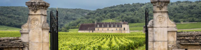 Burgundy and Beaujolais Wine Travel Package | Art In Voyage