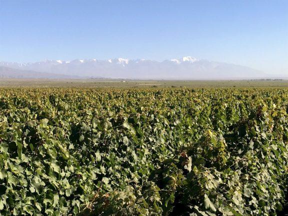 Mendoza - Uco Valley
