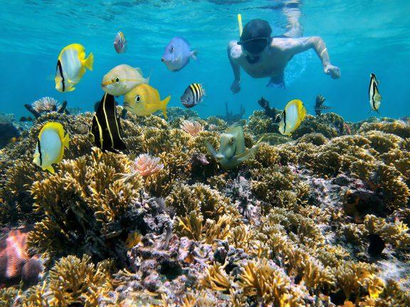 Snorkeling in Guanacaste
