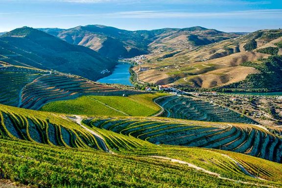 Classic Vintages of Douro