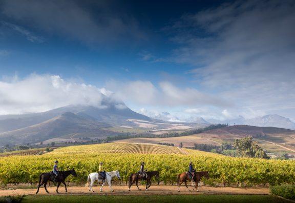 Horses & Wines