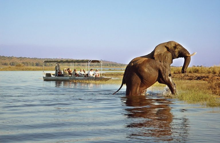 Discover Botswana with Art In Voyage