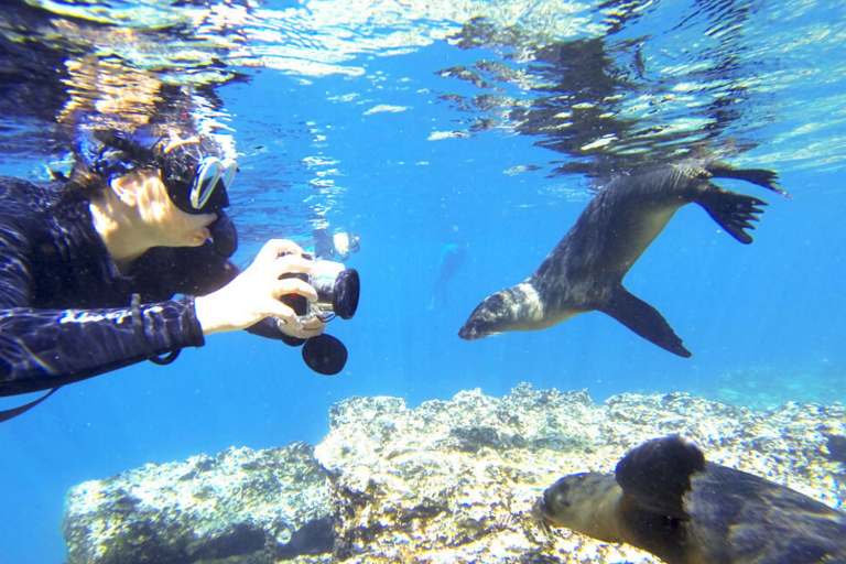 Galapagos Islands Private Expedition with Art In Voyage