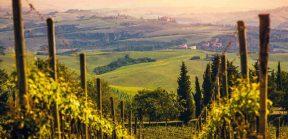 Mastering wines: Tuscany