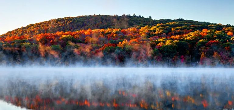 Fall Foliage, by Art In Voyage