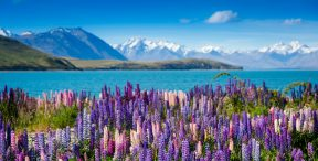 New Zealand At A Glance, by Art In Voyage