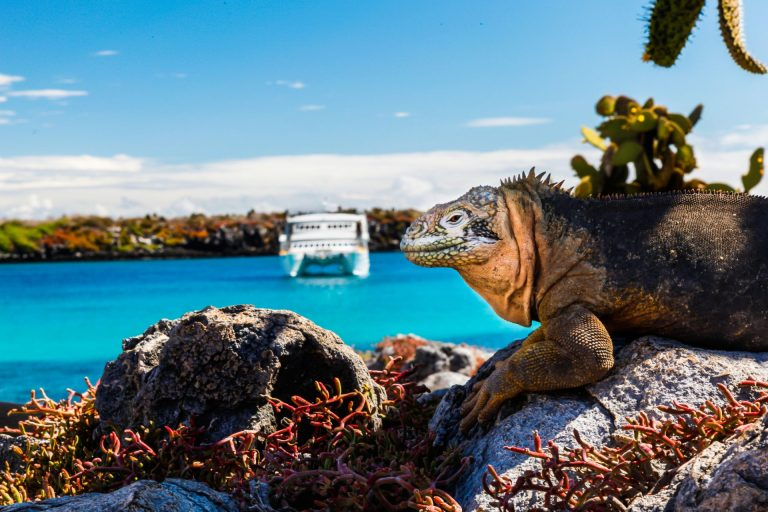 Private Expedition to the Galapagos, by Art In Voyage