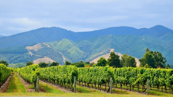 South Island vineyards
