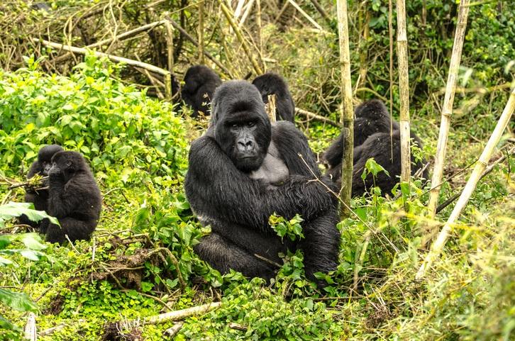 Rwanda, by Art In Voyage