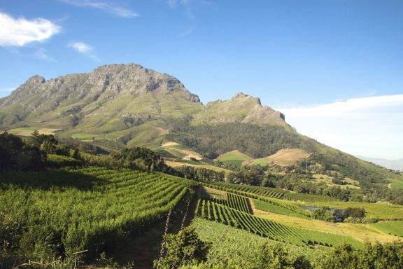 Activities in the Winelands