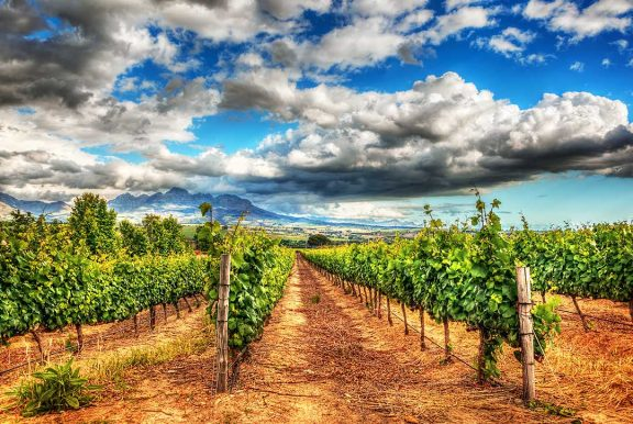 Verde Valley Wine Region